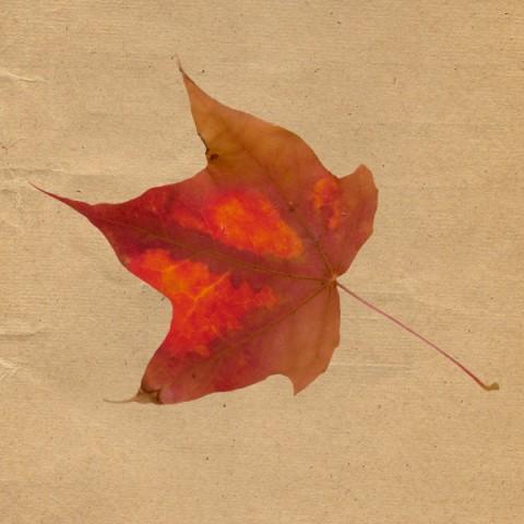 leaf 05