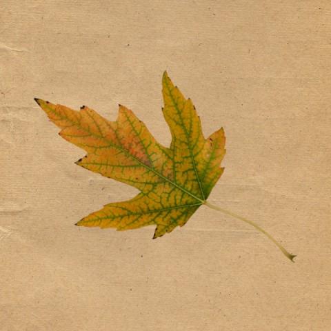 leaf 06
