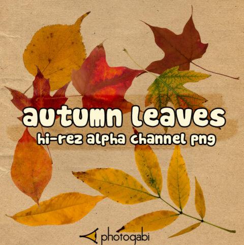 photogabi autumn leaves 01